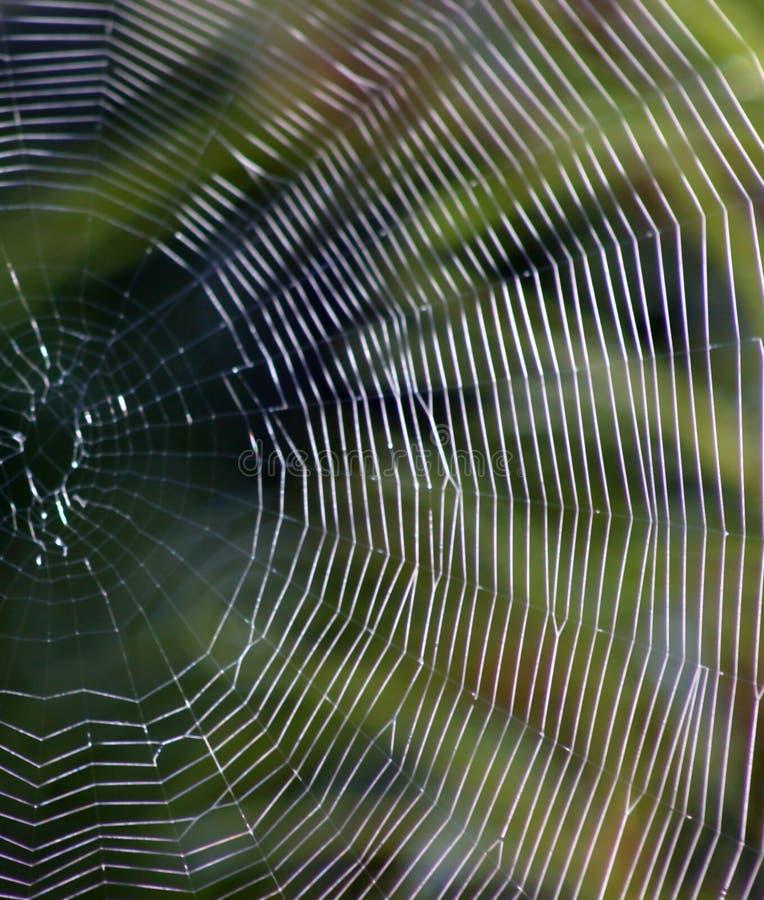 сеть раздела стоковое изображение