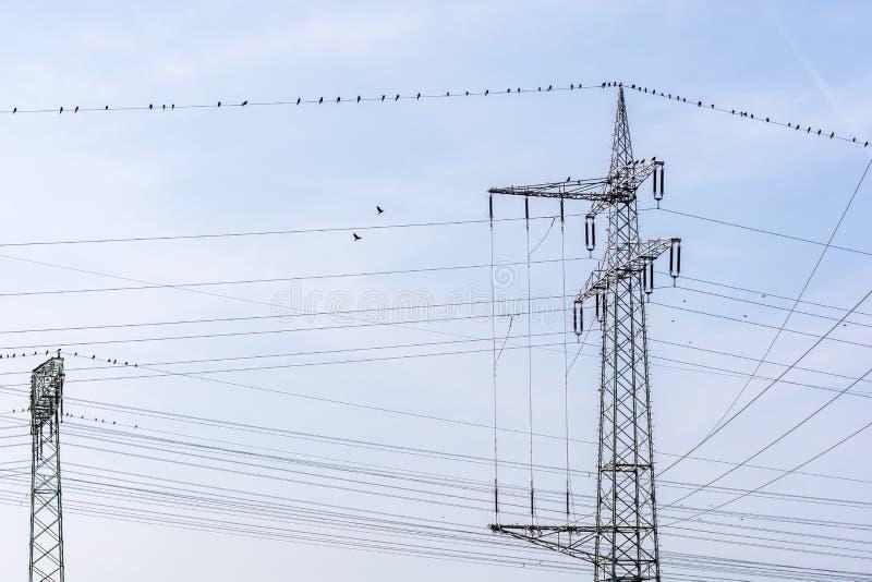 Сеть электричества с рангоутом ветви стоковые фото