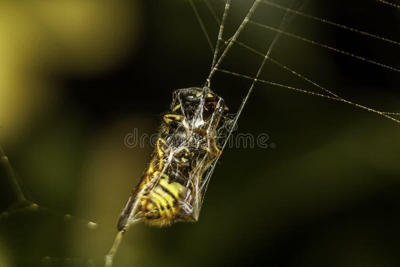 Сеть ` s паука стоковое изображение rf