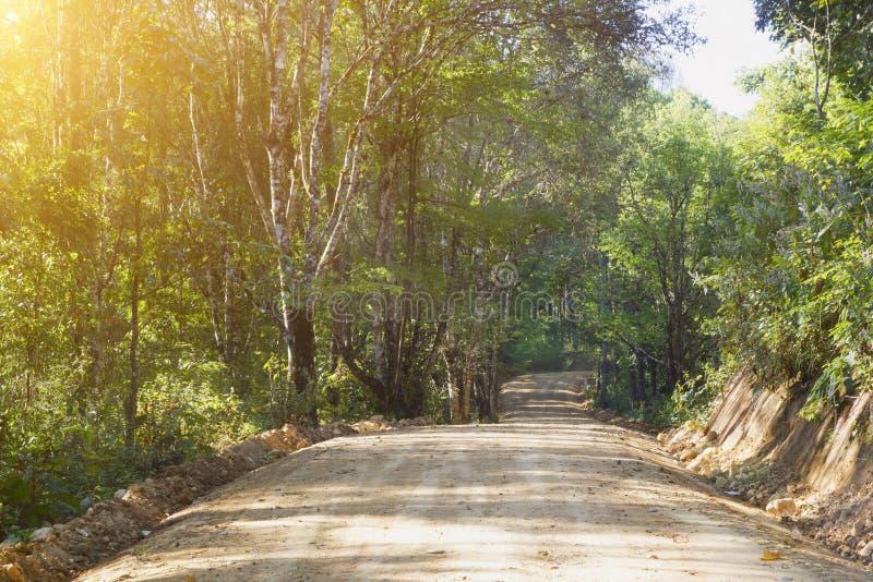 Сельская грязная улица в лесе стоковое фото rf
