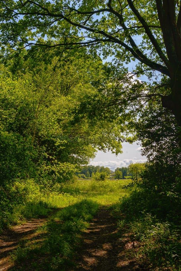 Сельская местность с листвой и путем стоковые изображения rf