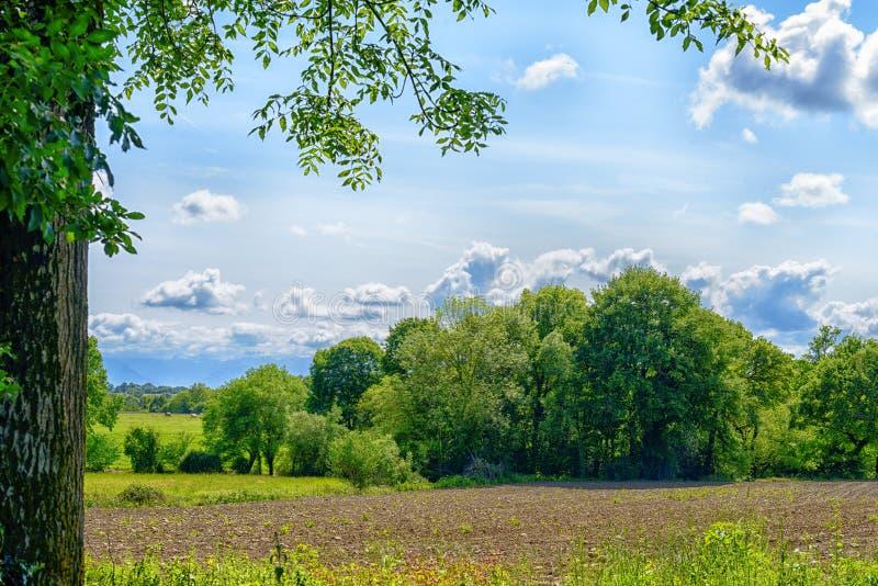 Сельская местность с листвой стоковые изображения rf
