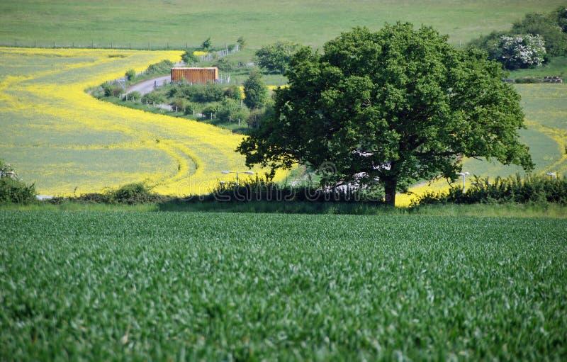 Сельская местность Bedfordshire стоковое изображение rf