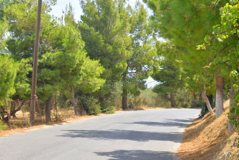 Сельская дорога в Крите стоковое изображение rf