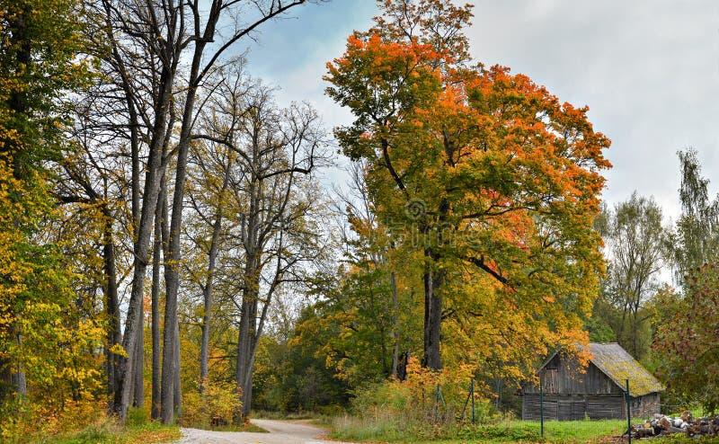 Сельская дорога около деревни Karli, Латвии стоковое изображение