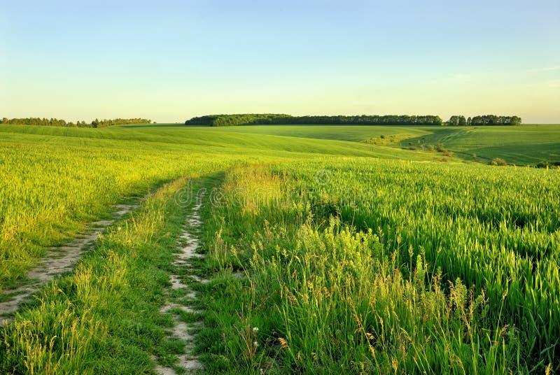 Сельская дорога через поле стоковые фото