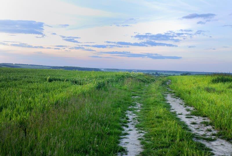Сельская дорога через поле стоковые изображения