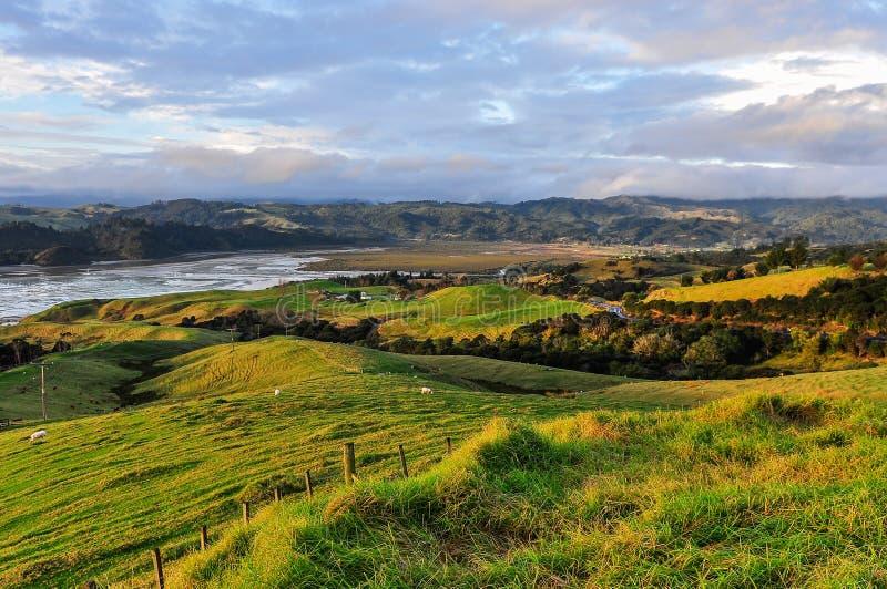 Сельский ландшафт в полуострове Coromandel, Новая Зеландия стоковая фотография rf