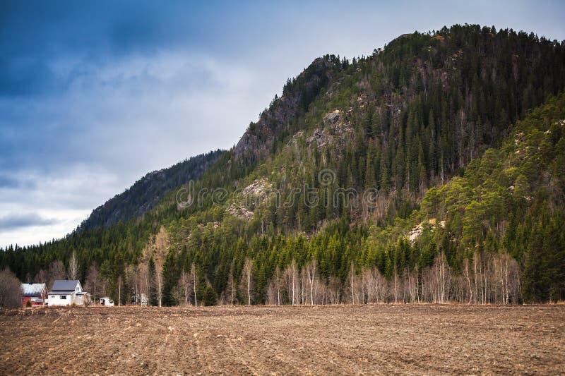 Сельский норвежский ландшафт, сухое поле стоковая фотография