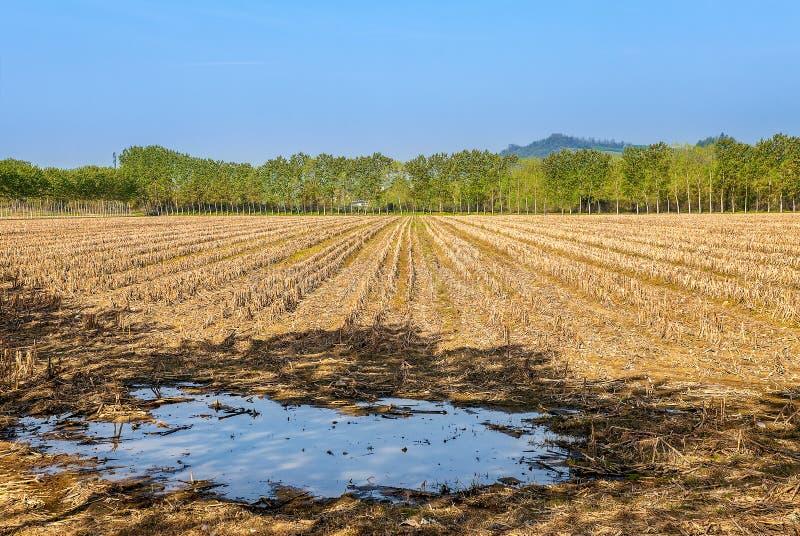 Сельское поле в Пьемонте, Италии стоковая фотография