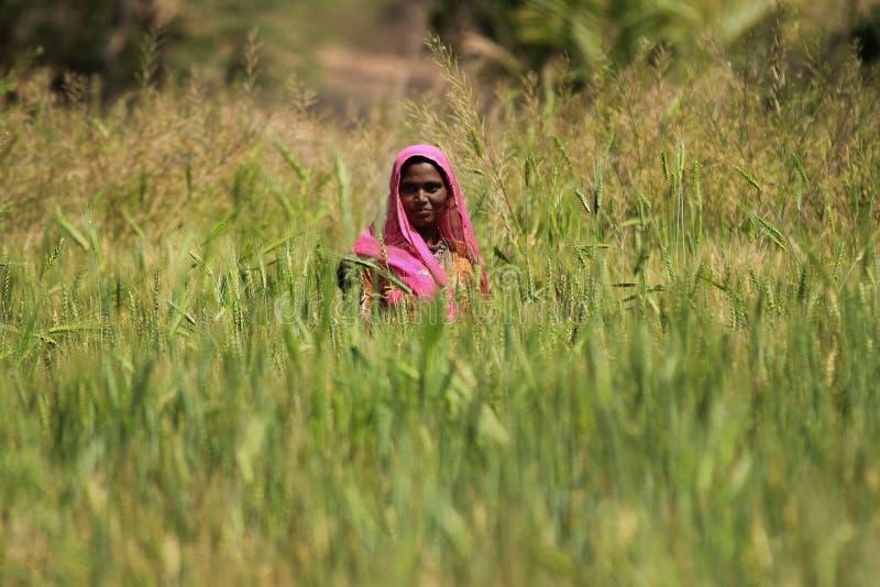 Сельское хозяйство женщины стоковые фотографии rf