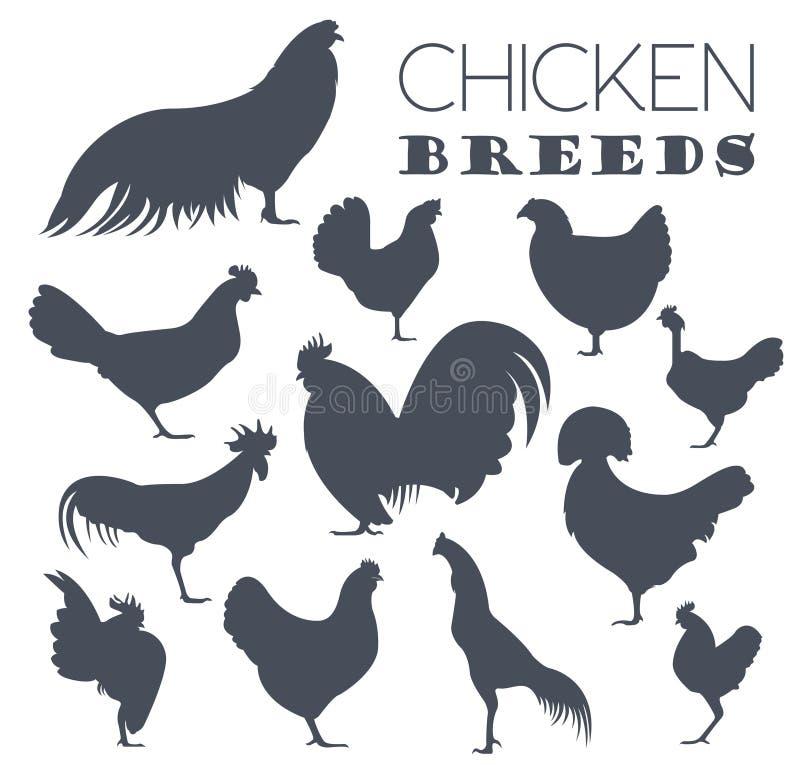 Сельское хозяйство птицы Комплект значка пород цыпленка Плоский дизайн иллюстрация штока