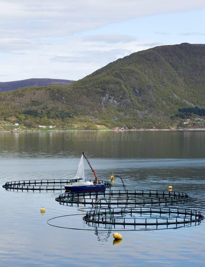 Download Сельское хозяйство рыб стоковое фото. изображение насчитывающей повышение - 40580816