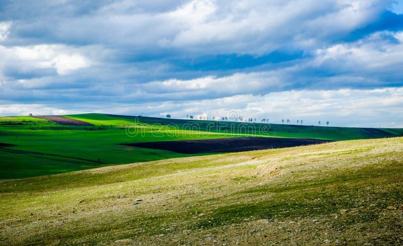 Сельскохозяйственное угодье стоковые изображения