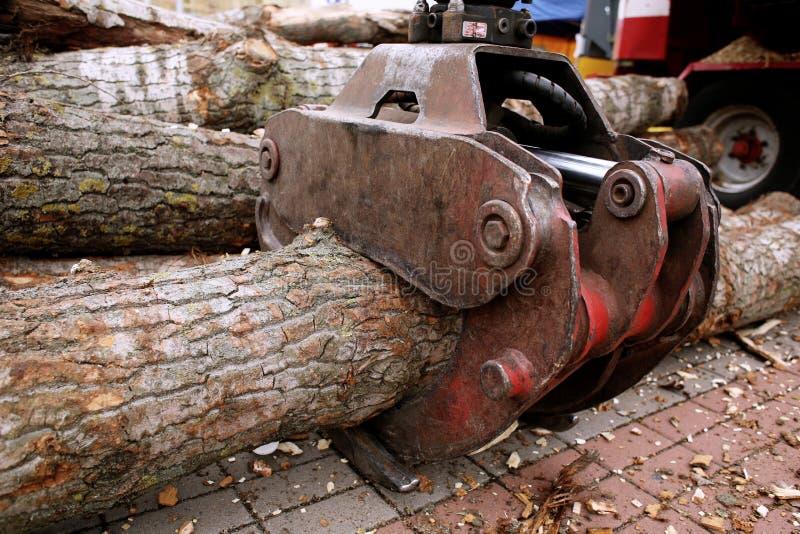 Сжатие с стволом дерева стоковая фотография rf