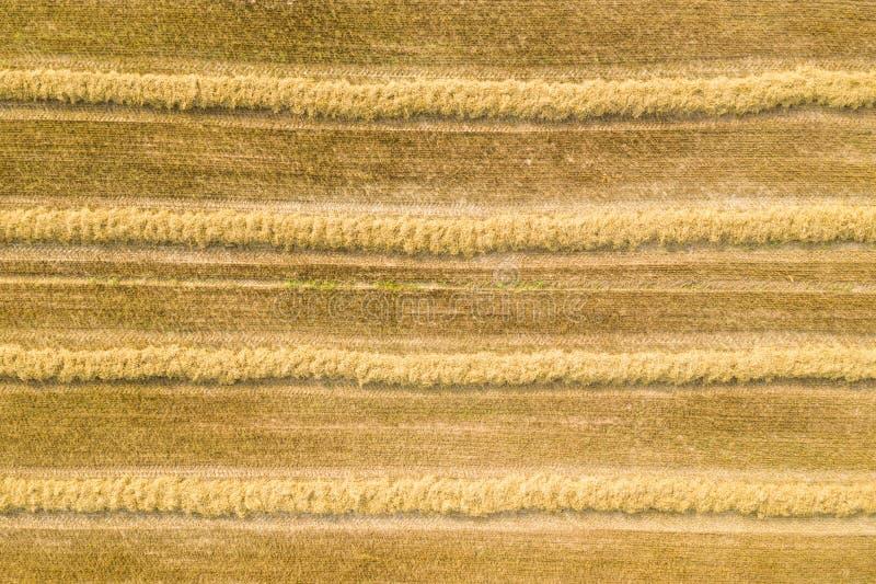 Сжатое пшеничное поле стоковая фотография rf