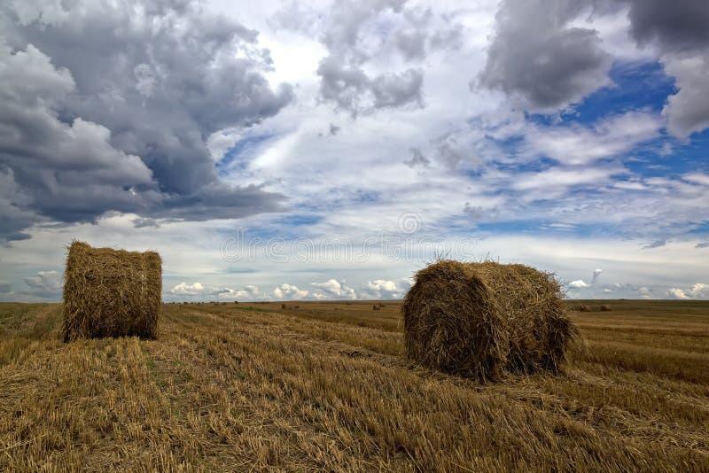 Сжатое пшеничное поле с кренами сена и бурным небом стоковое изображение