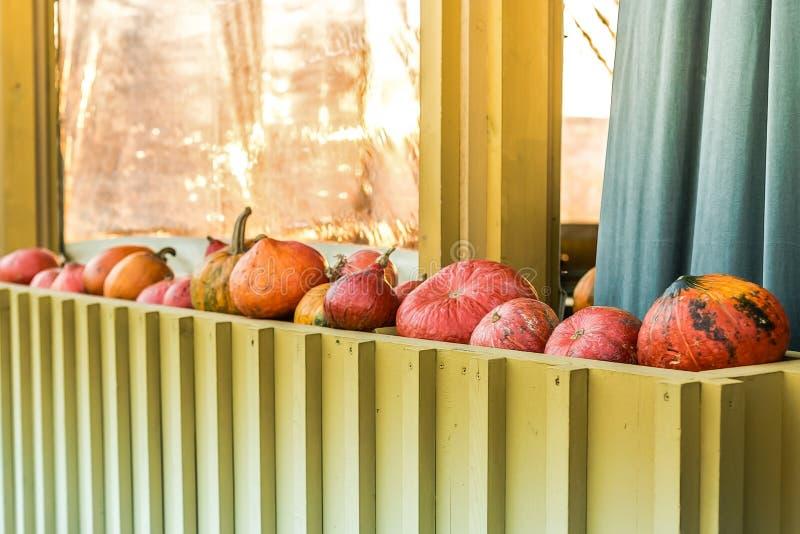 Сжатые овощи осени Тыквы лежат в ряд на улице стоковое изображение