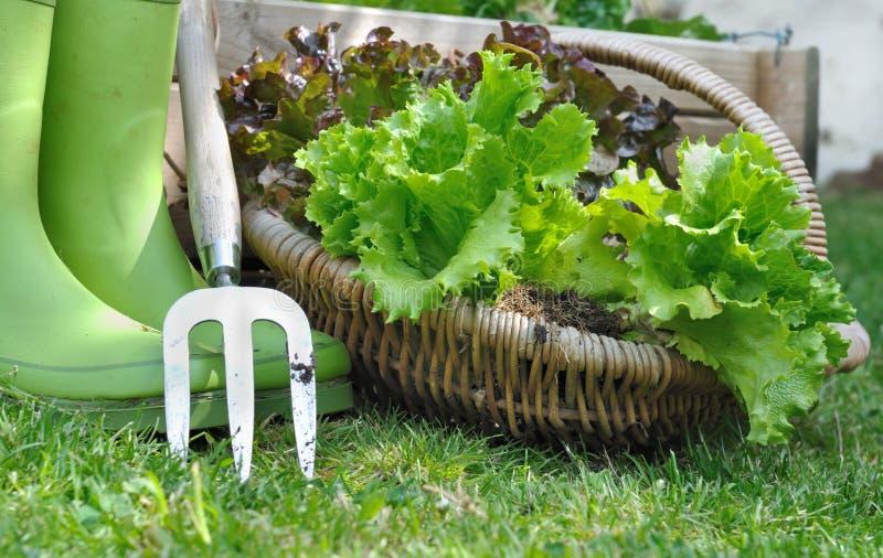 Сжатый салат стоковое фото rf