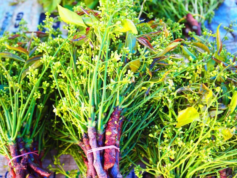 Сиамские стог, овощи, который нужно съесть для здоровой и бит листьев neem стоковая фотография