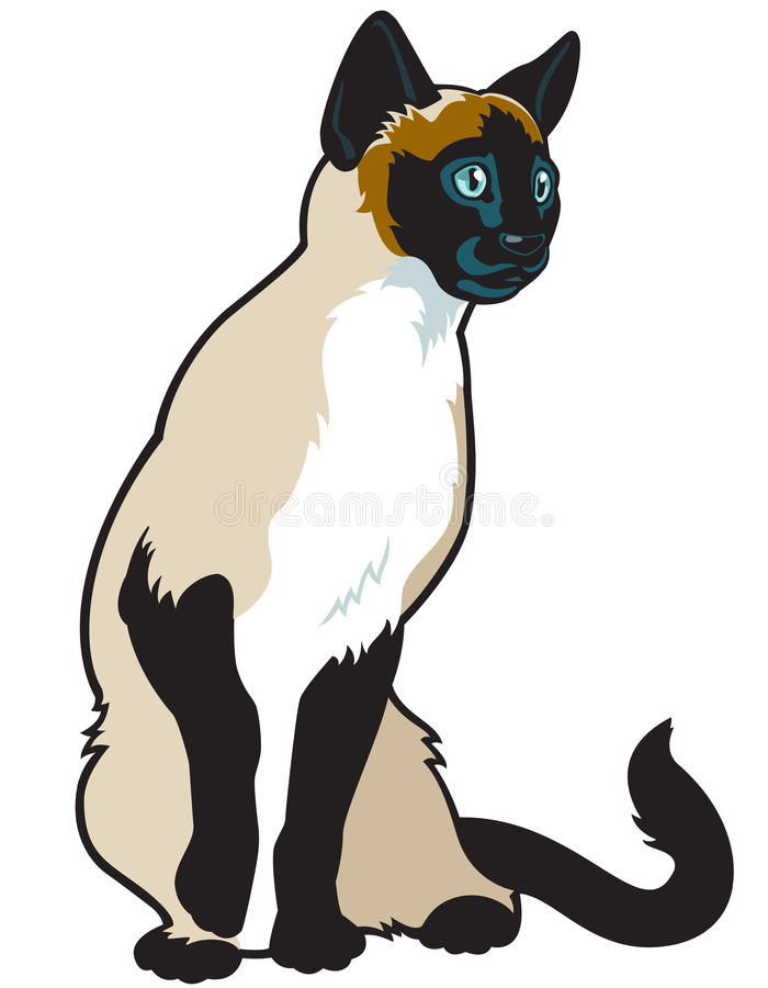 Сиамский кот иллюстрация штока