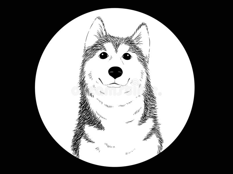 Сибирская лайка иллюстрация штока