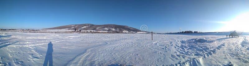 Сибирская ширь стоковые изображения rf