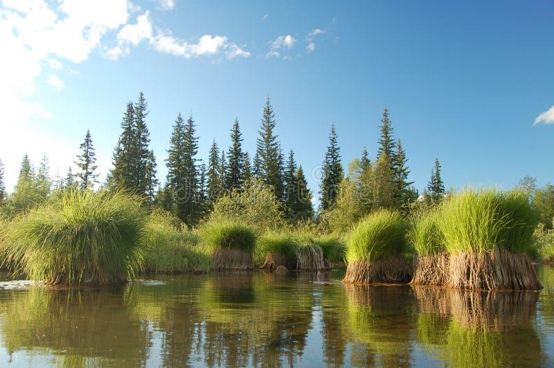 Сибирь стоковое изображение