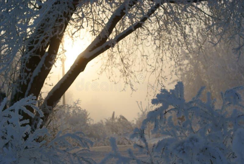 Сибиряк заморозил восход солнца стоковые изображения