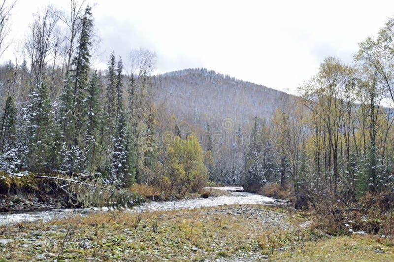 Сибиряк, река горы taiga не обширный, но очень быстрый оно имеет много рыб Подачи среди гор и лесов стоковое изображение rf