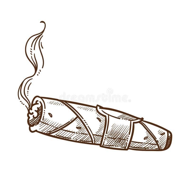 Сигара куря естественным изолированный табаком аксессуар эскиза винтажный иллюстрация штока