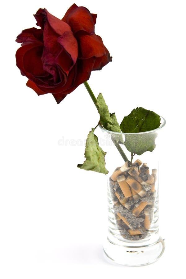 Сигареты стоковое фото