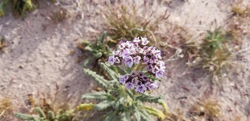 Сигналят внутри цветки стоковые изображения rf