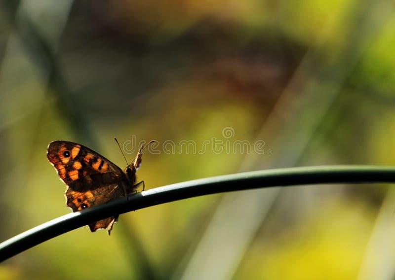 Сигнал бабочки стоковые изображения rf