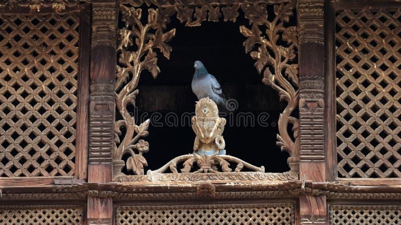 Сидеть голубя стоковое изображение