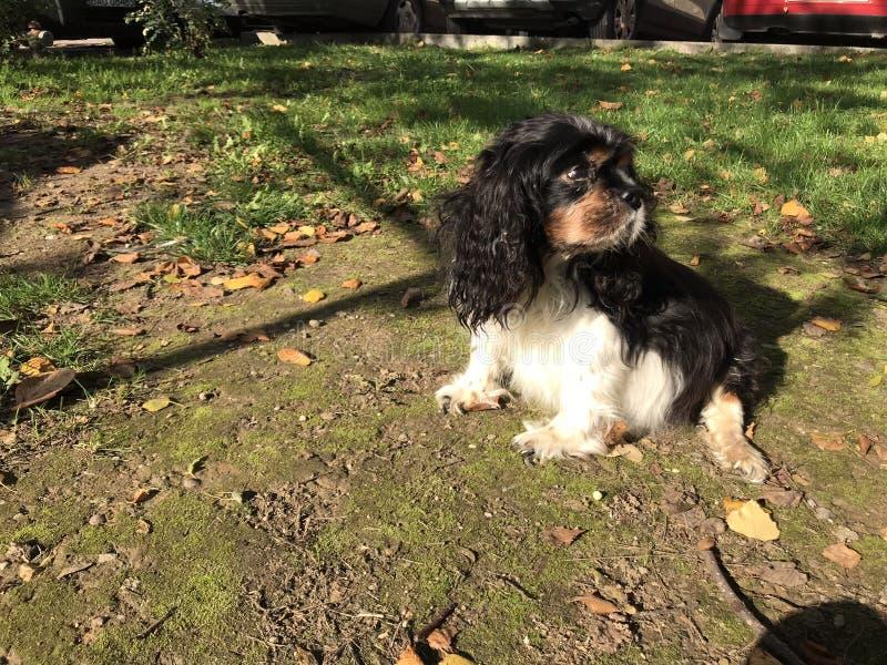 Сидя собака стоковое изображение rf
