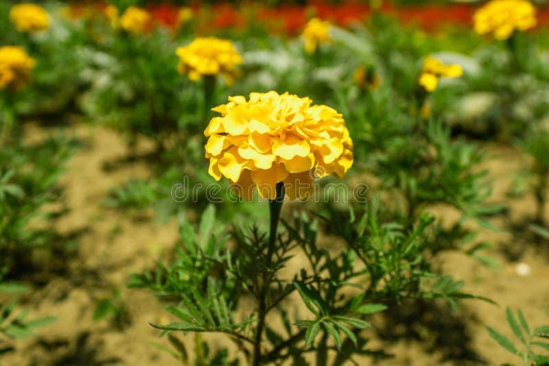 Сила желтого цвета стоковая фотография rf