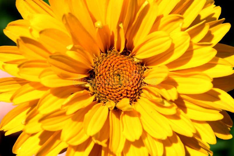сила цветка Стоковые Фотографии RF