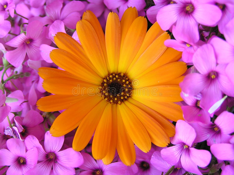 сила цветка стоковое фото