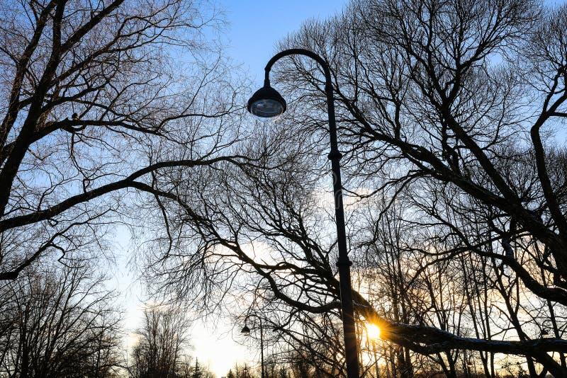 Силуэты безлистных деревьев и уличного света и солнца против голубого неба на заходе солнца в городе паркуют стоковые фотографии rf