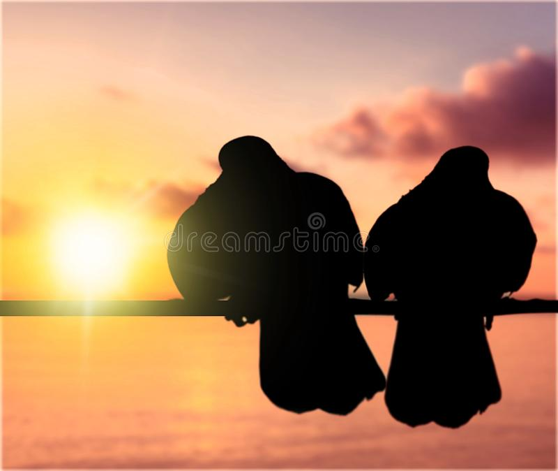 Силуэты 2 голубей на предпосылке захода солнца стоковые изображения rf