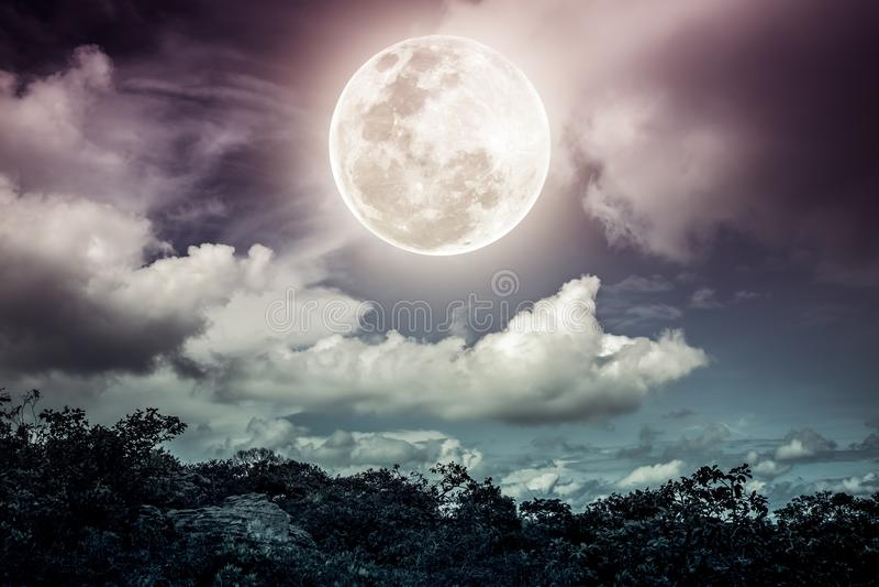 Силуэты дерева и неба с облаками, яркого полного m nighttime стоковое фото rf