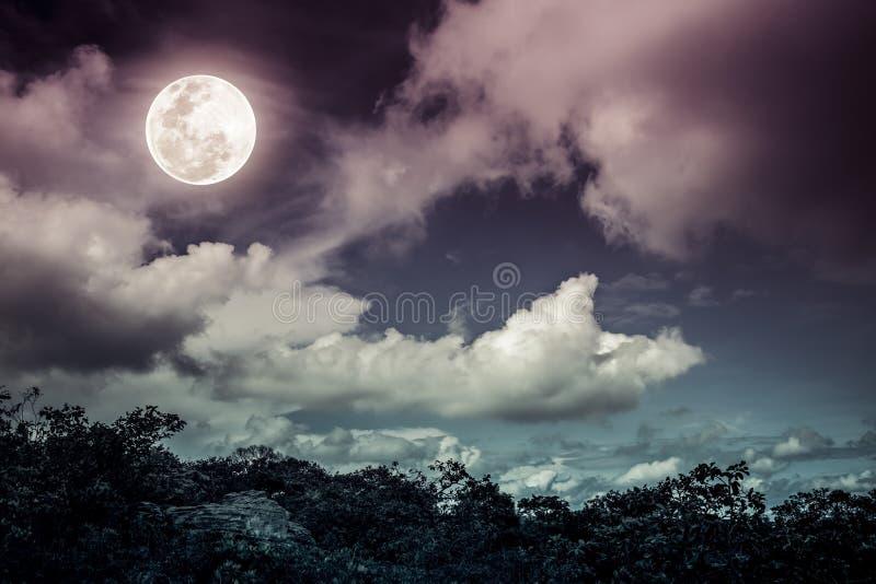 Силуэты дерева и неба с облаками, яркого полного m nighttime стоковое изображение rf
