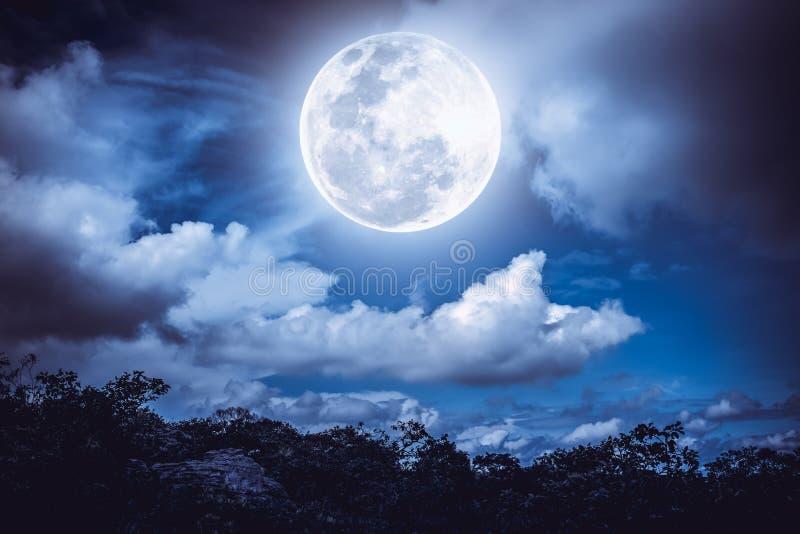 Силуэты дерева и неба с облаками, яркого полного m nighttime стоковые фотографии rf