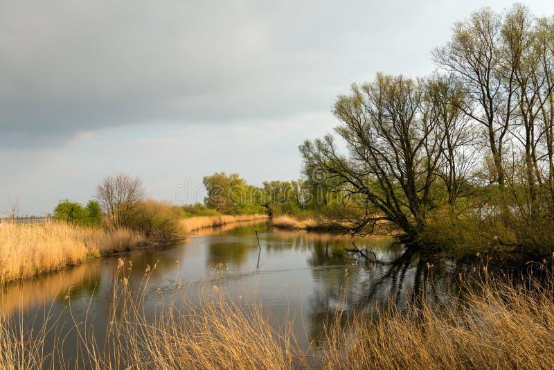 Силуэты дерева отразили в поверхности воды пруда стоковая фотография rf