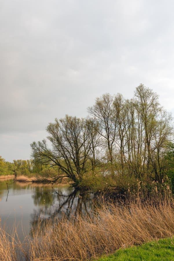Силуэты дерева отразили в поверхности воды пруда стоковые изображения