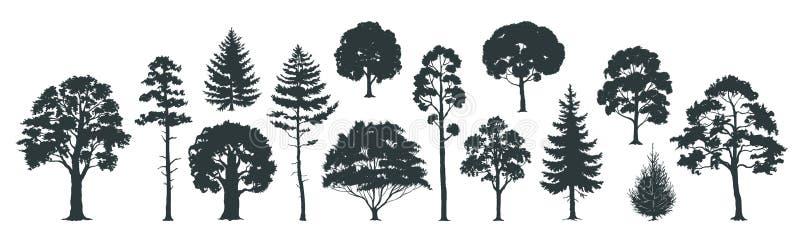 Силуэты деревьев Ели и спрусы сосен леса и парка, coniferous и лиственные деревья Изолированный вектором набор природы иллюстрация штока
