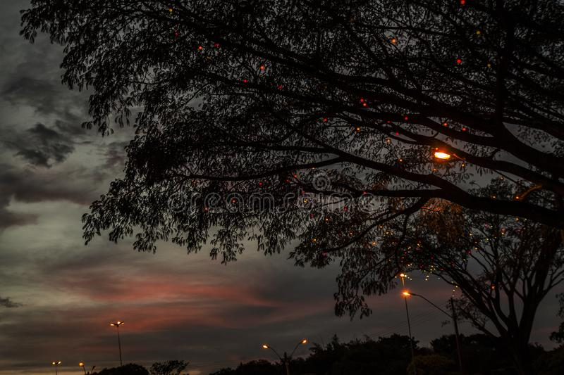 Силуэты деревьев стоковые изображения rf