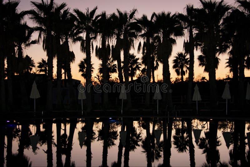 Силуэты ладоней гребут и зонтики, на предпосылке неба захода солнца стоковые фотографии rf