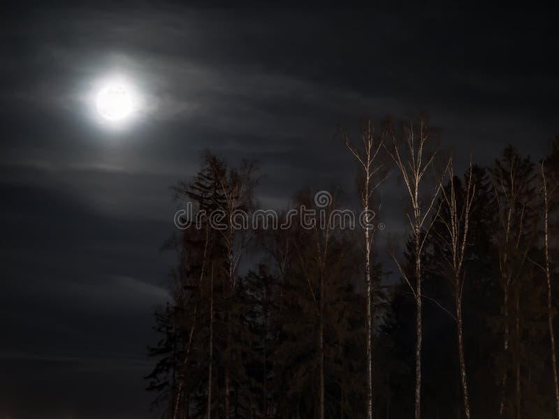 Силуэты леса под полнолунием и облачным небом стоковое фото